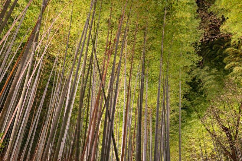 Сад дзэна рощи Arashiyama бамбуковый освещает вверх вечером стоковое фото