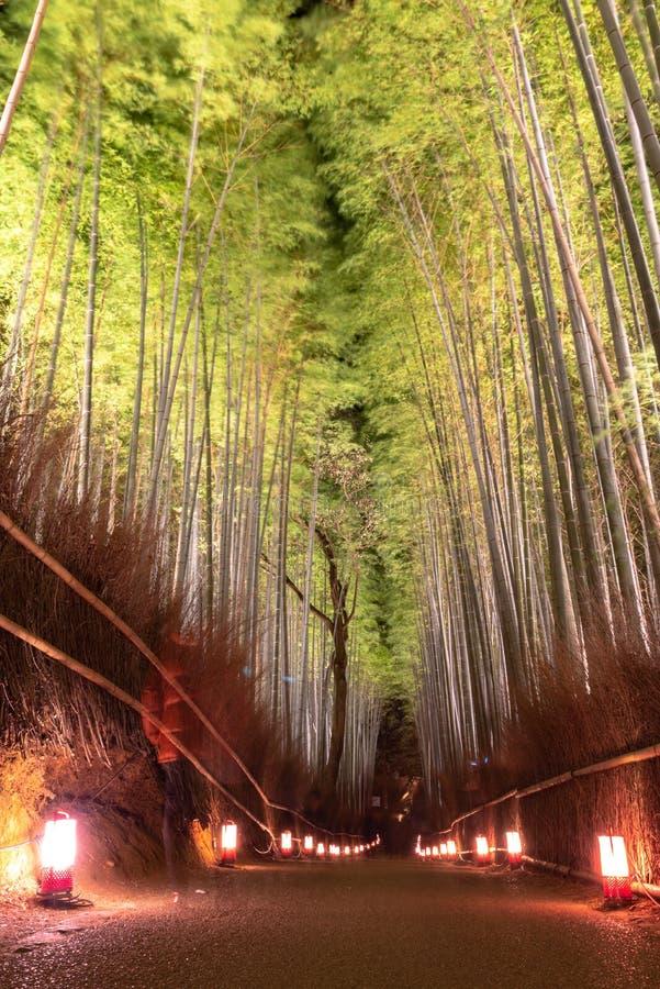 Сад дзэна рощи Arashiyama бамбуковый освещает вверх вечером стоковые изображения