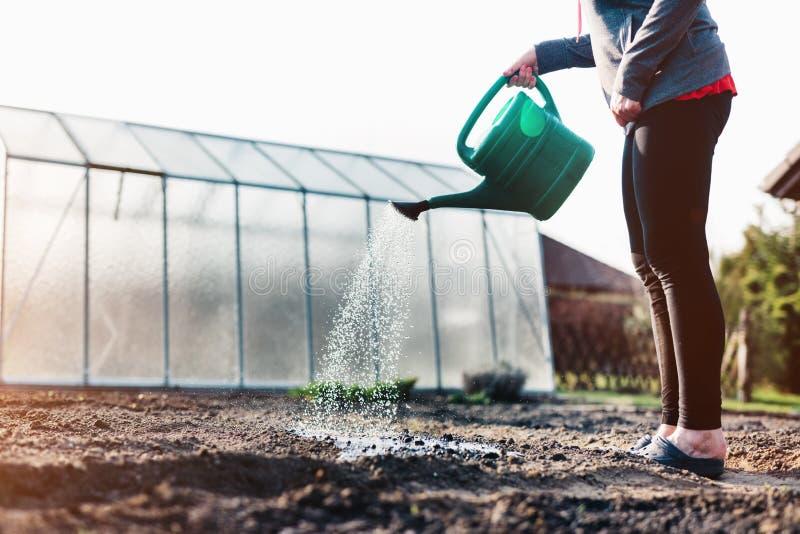 Сад женщины моча Культивировать органические овощи стоковое фото rf