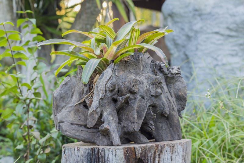 Сад завода Bromeliad стоковые изображения rf