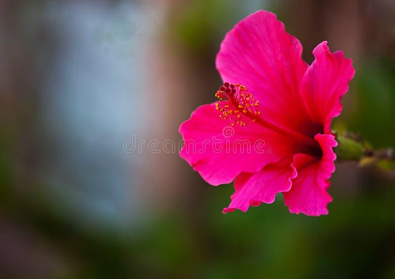 Сад задворк цветков дома в утре весны стоковая фотография