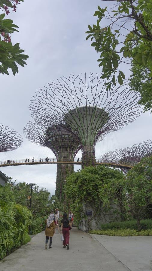 Сад заливом в Сингапуре стоковые изображения rf