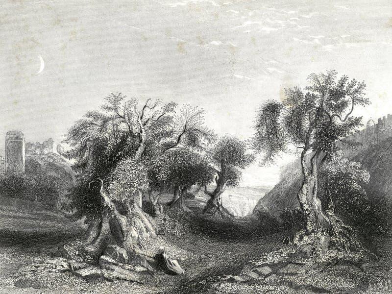 Сад иллюстрации Gethsemane помоленной Иисусом иллюстрация вектора