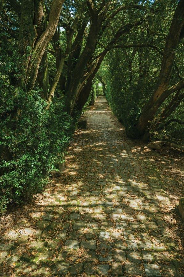 Сад и тропа с деревьями делая тоннель стоковое фото