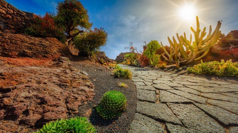 Сад кактуса стоковые фотографии rf