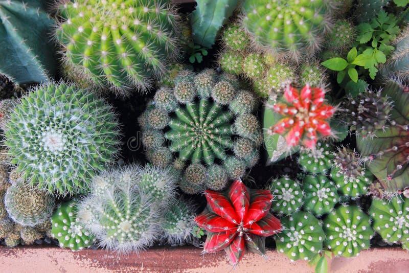 Сад кактуса взгляд сверху, разбивочный фокус стоковое изображение rf