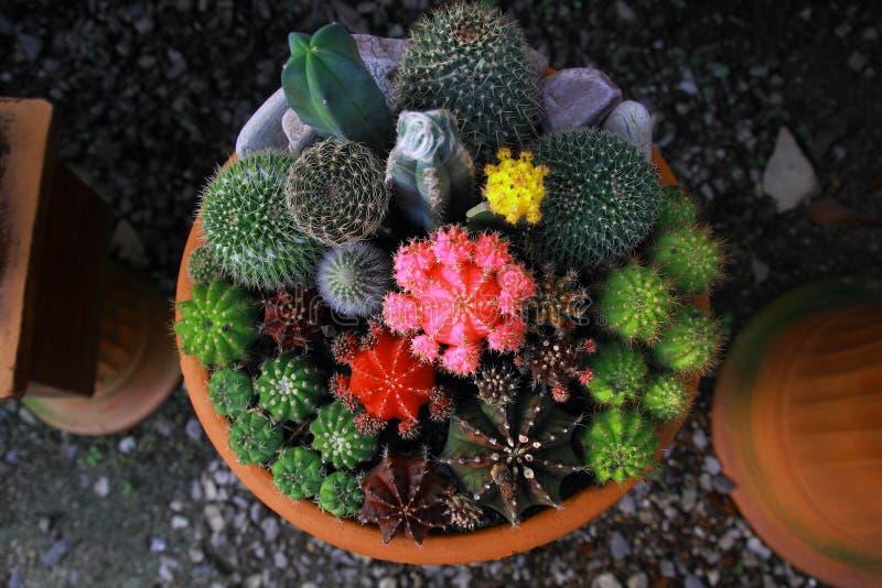 Сад кактуса взгляд сверху, разбивочный фокус стоковые фотографии rf