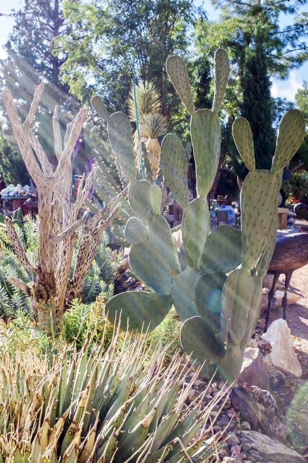 Сад кактуса в питомнике кактуса Невады стоковое изображение