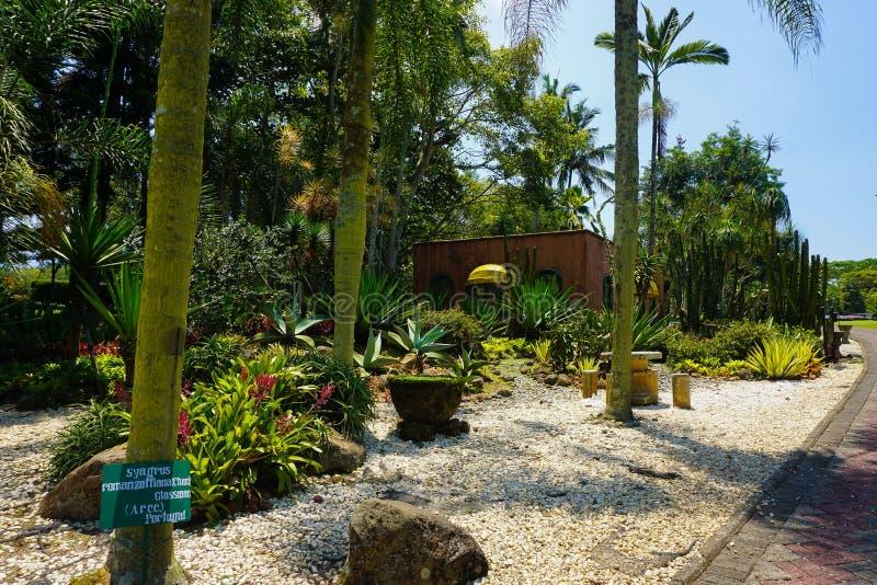 Сад кактуса с небольшим камнем на том основании и пальма с зеленой предпосылкой дерева - фото bogor стоковое изображение rf