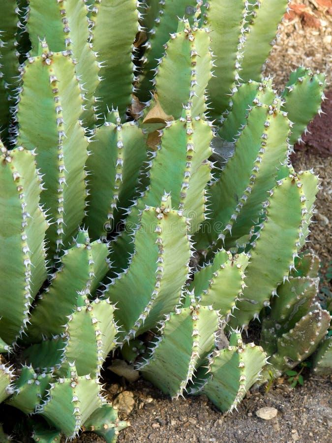 сад кактуса стоковые изображения rf
