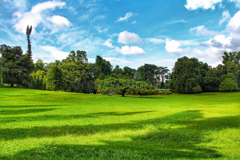 Сад Канди ботанический в Шри-Ланке стоковое фото rf