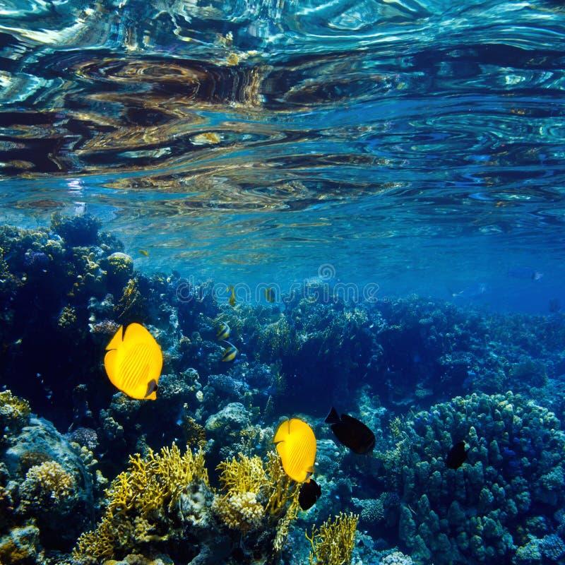 Сад коралла отмелый с лоснистой поверхностью воды стоковое фото rf