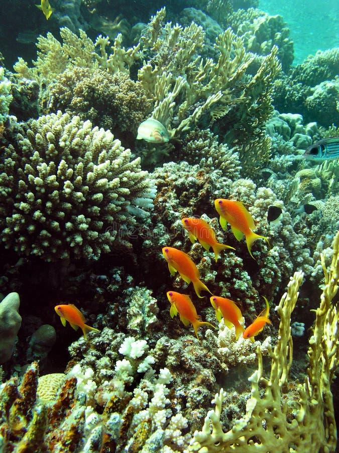сад коралла стоковые изображения