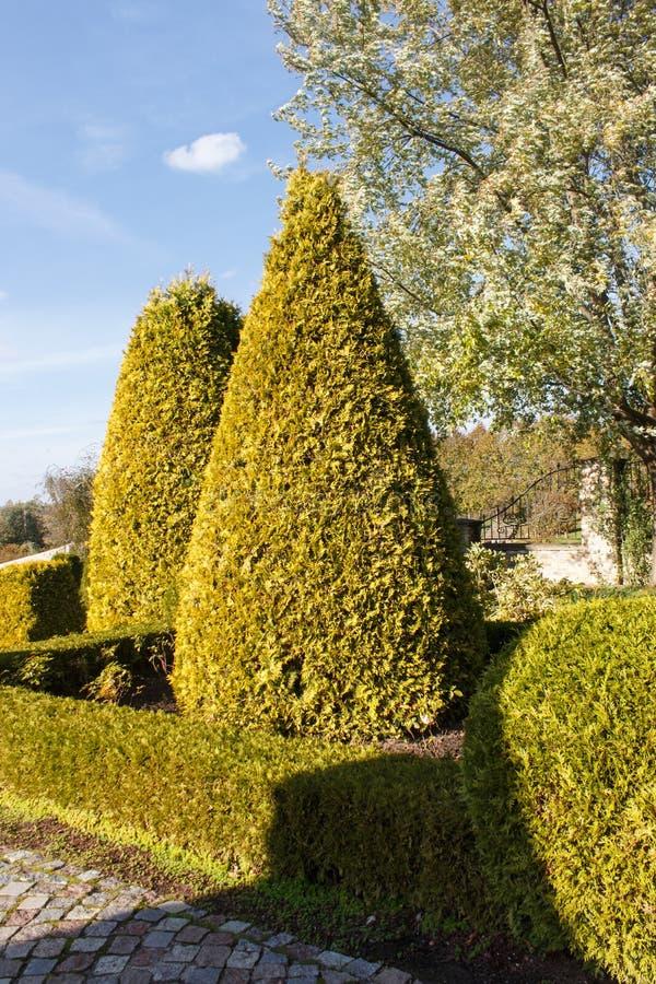 Сад коттеджа с фигурной стрижкой кустов и уравновешенными кустами стоковые фотографии rf