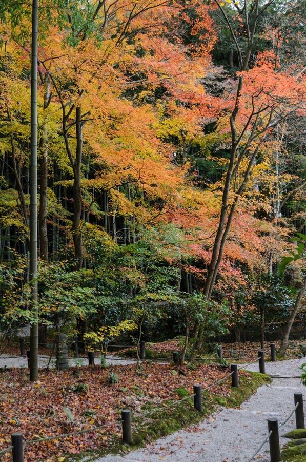 Сад листвы клена осени на виске Enkoji в Киото, Японии стоковые фотографии rf