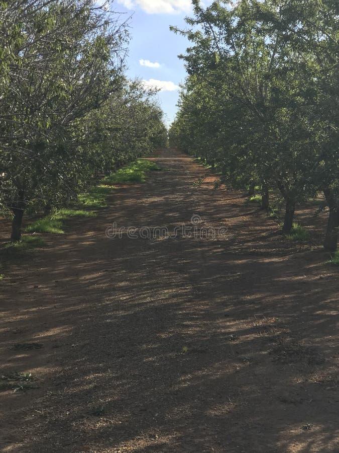 Сад миндалины стоковые фотографии rf