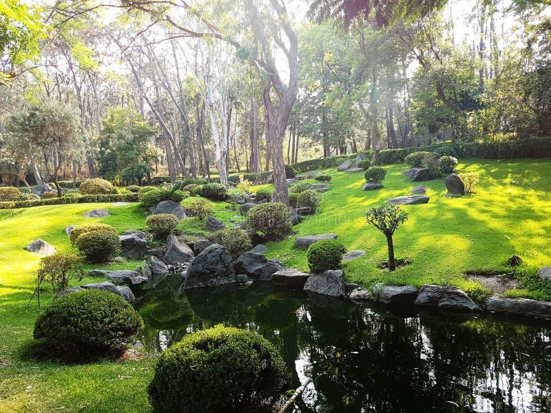 сад мирный стоковое изображение