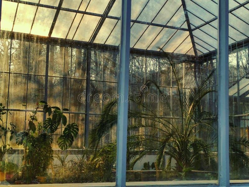 сад немногая стоковые изображения