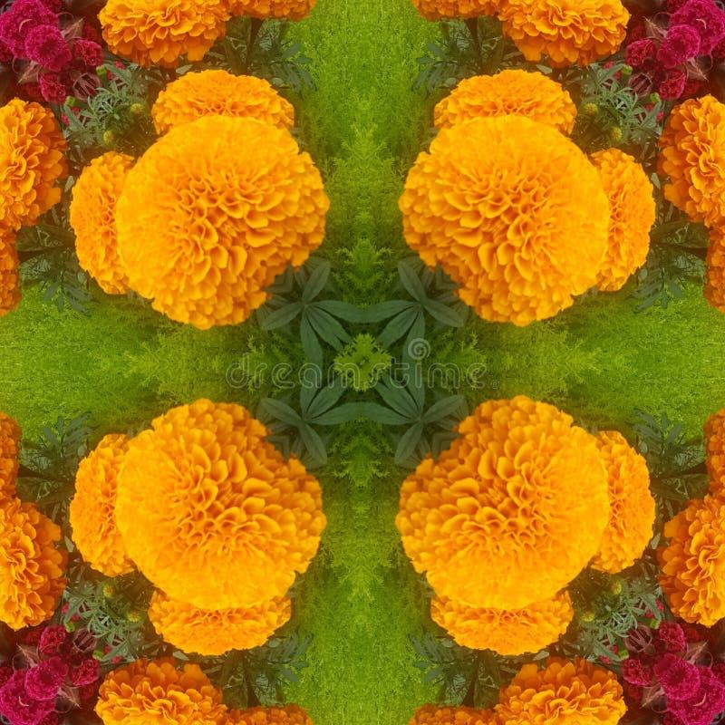 Сад оранжевых цветков красивый стоковое изображение rf