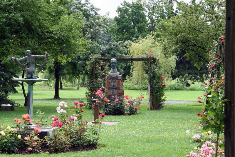 сад поднял стоковые изображения