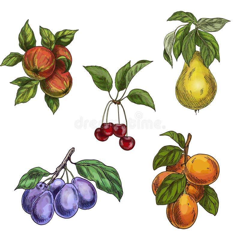 Сад приносить с листьями и ветвями Вишня, яблоки, груша, сливы, абрикосы иллюстрация штока