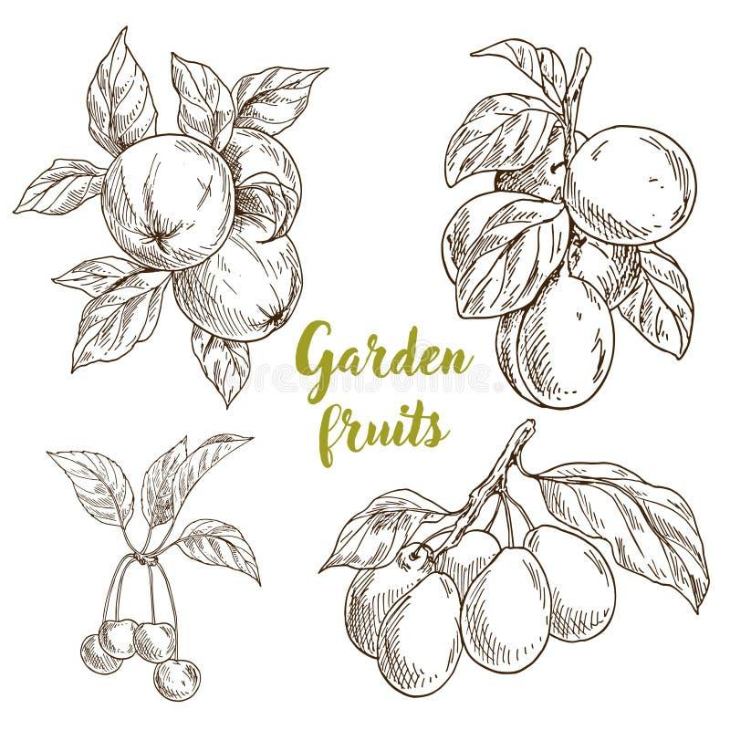 Сад приносить, яблоки, абрикосы, вишни, сливы иллюстрация вектора