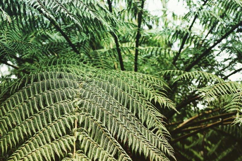 Сад рая папоротника дерева стоковое фото