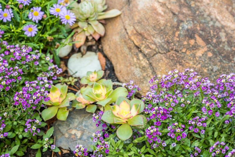Сад утеса с цветками стоковое изображение rf