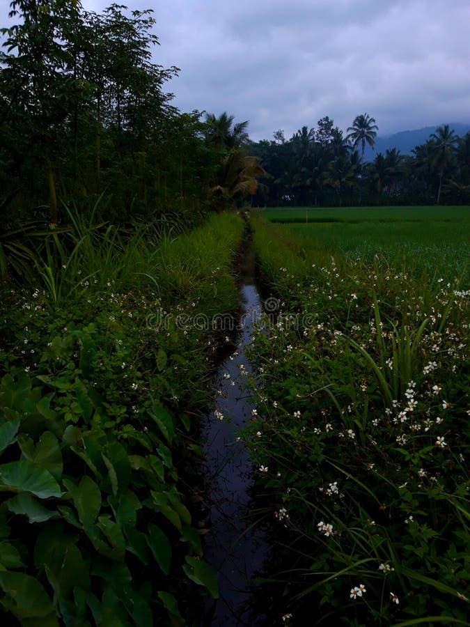 Сад утра около поля стоковое фото