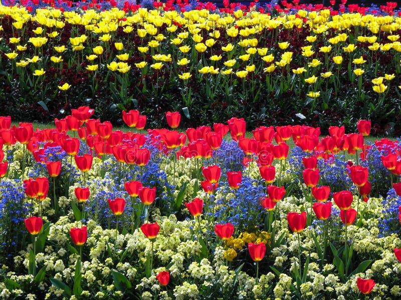 Сад цветеня стоковое фото