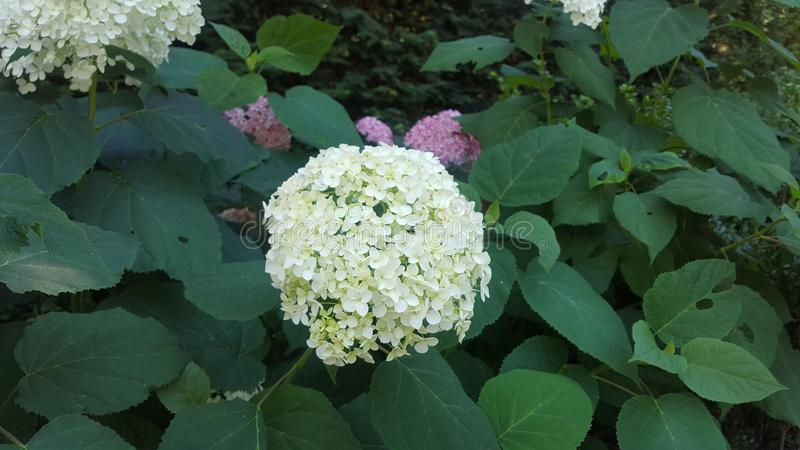 Сад цветков весны, моя воодушевленность стоковое изображение