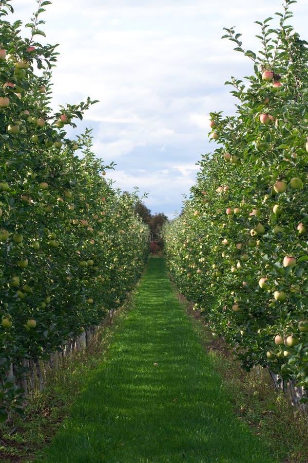 сад яблока стоковая фотография rf