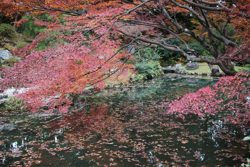 сад Autam в виске Konkai Komyoji стоковые фотографии rf