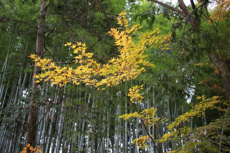 сад Autam в виске Konkai Komyoji стоковое изображение