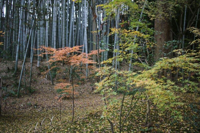 сад Autam в виске Konkai Komyoji стоковые изображения