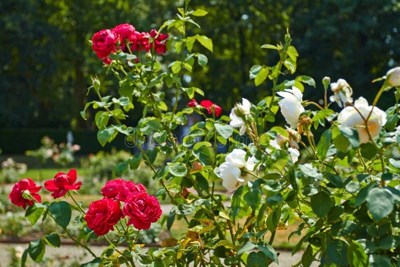 Сад De Haar Замка стоковое фото
