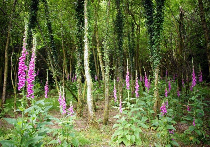 Сад Faeries foxgloves и плюща покрыл березу стоковые фото
