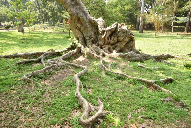 Сад Lalbagh ботанический, Бангалор, Karnataka стоковое фото rf