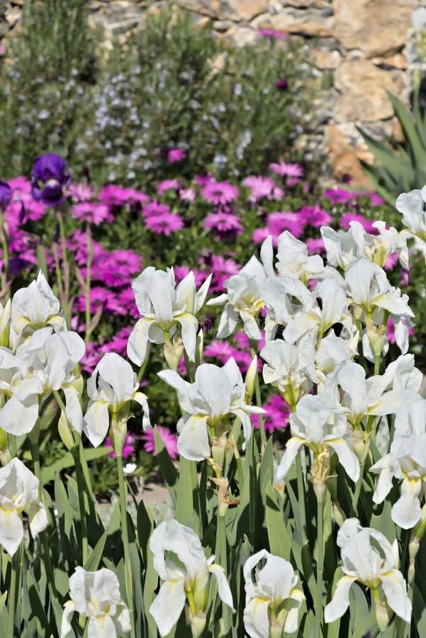 Сад Ligurian побережья стоковые фото