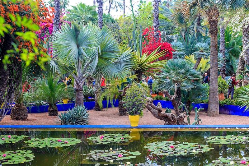 Сад Majorelle ботанический сад и сад ландшафта художника в Marrakech стоковое изображение rf