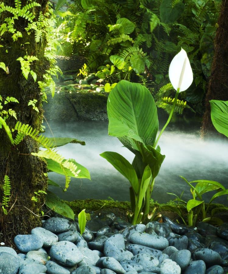 сад oriental стоковая фотография