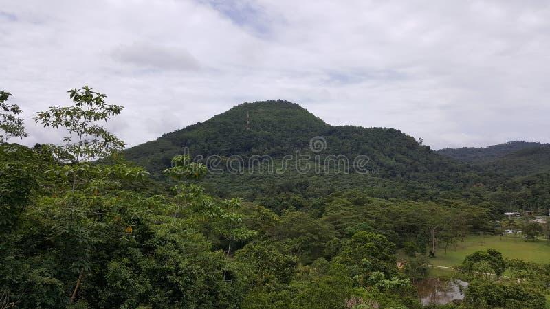 сад seethawaka ботанический стоковая фотография rf