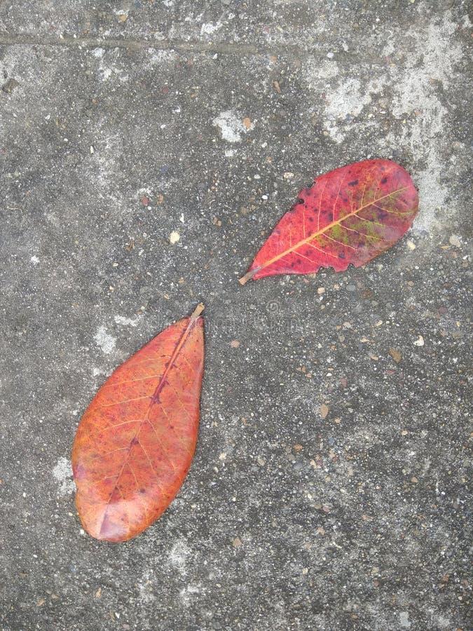 Сажа фото листьев стоковые изображения