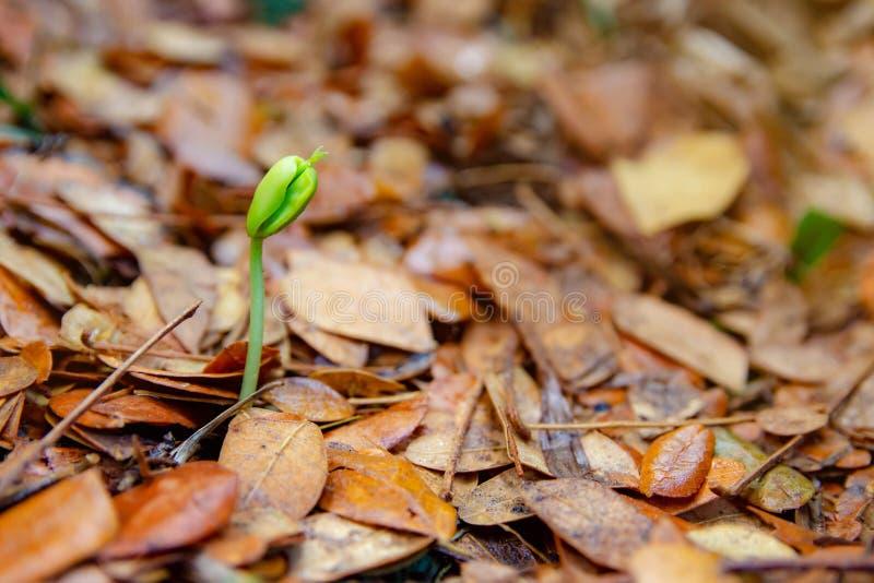 Саженцы растут от земли стоковое изображение