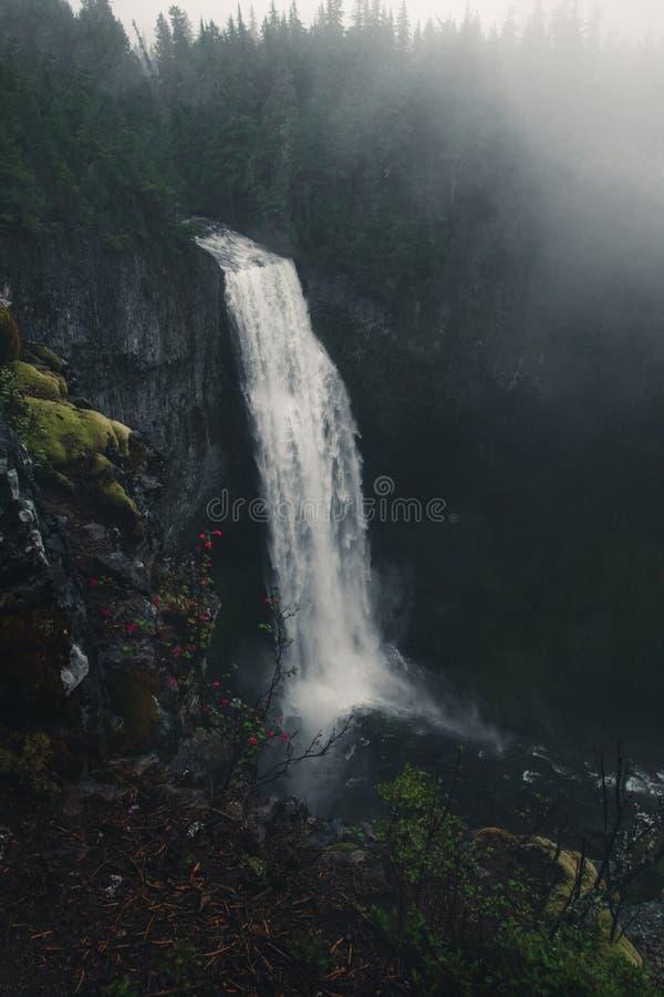 Сайт наблюдения за Солт Крик Фолс и площадь Пикника, Национальный лес Уилламетте, Орегон, Соединенные Штаты Америки, Путешествие  стоковые фотографии rf
