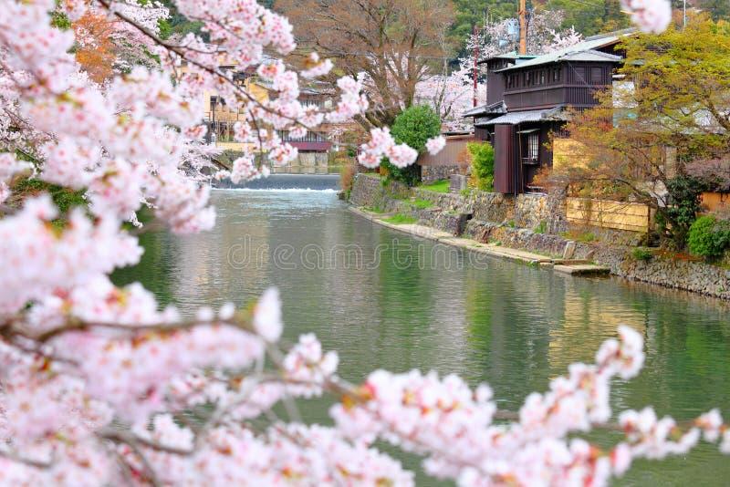 Сакура в Киото стоковые изображения