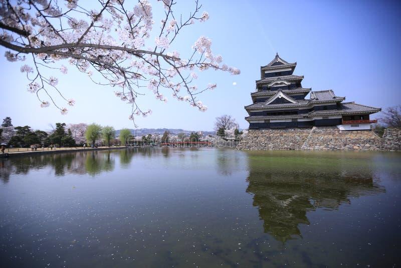 Сакура и замок, Мацумото, Япония стоковые изображения rf