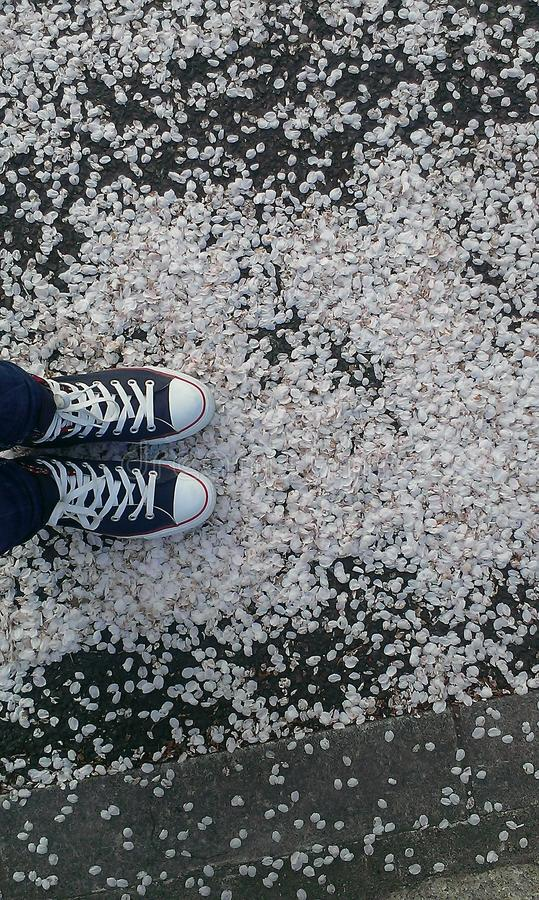 Сакура стоковые фото