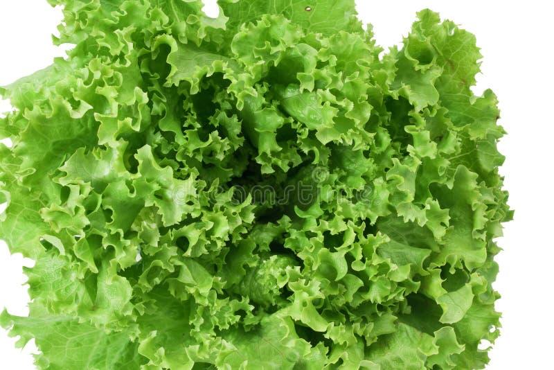 Download салат крупного плана стоковое изображение. изображение насчитывающей органическо - 18382641