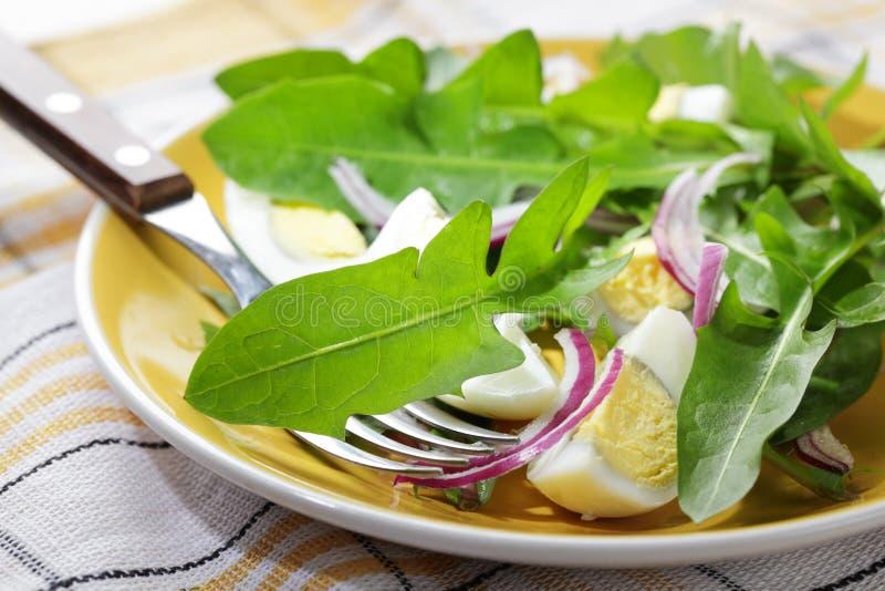 салат одуванчика стоковые фотографии rf